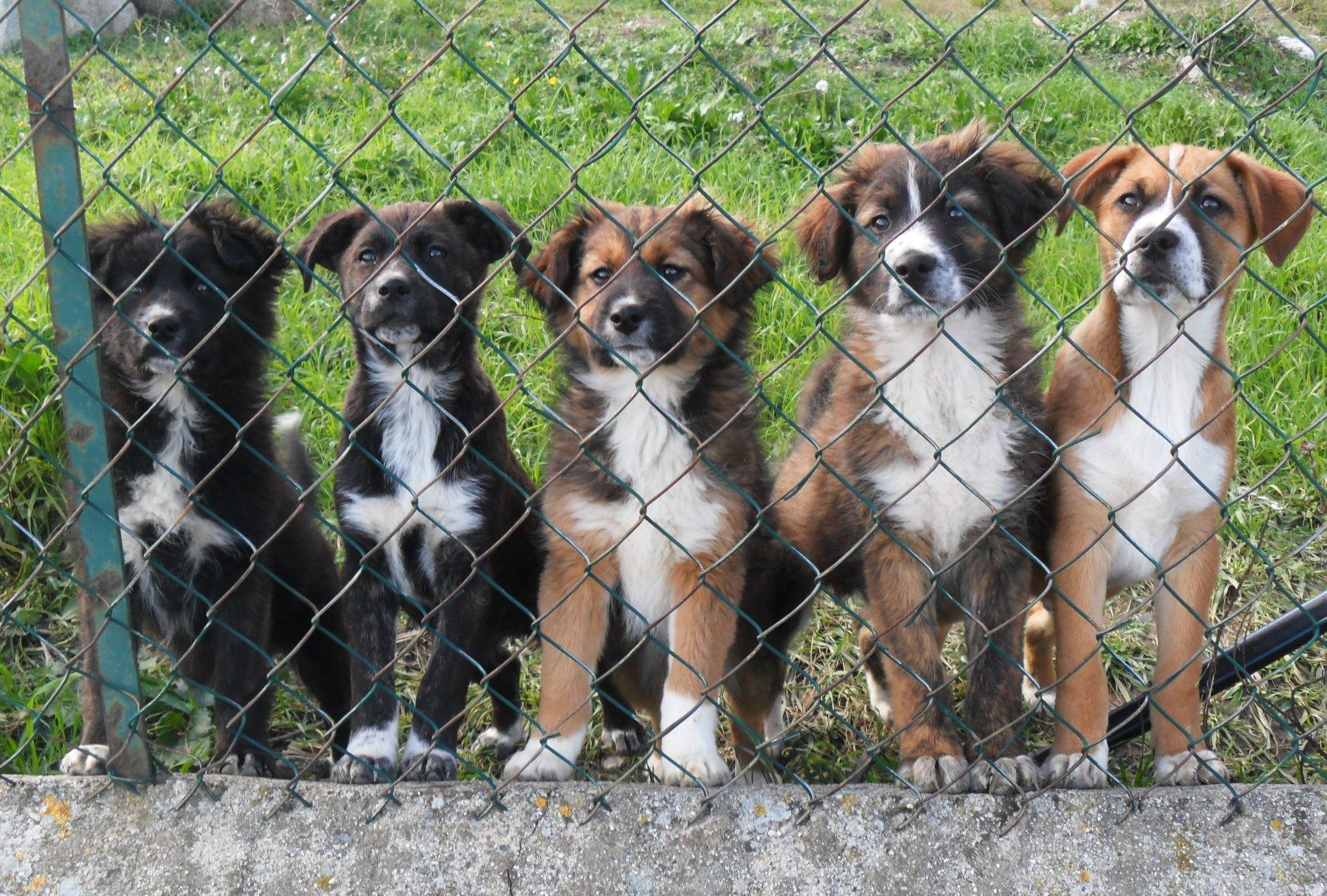 Ascea 300 euro per chi adotta un cane randagio for Animali da casa