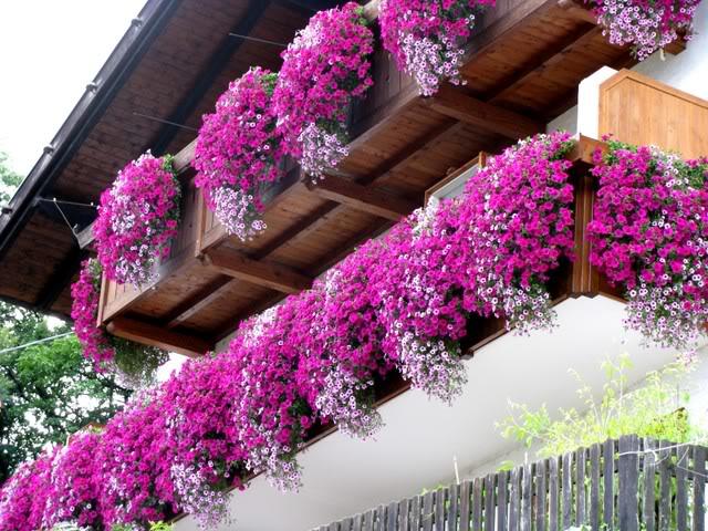 CAPACCIO PAESTUM : Borghi in Fiore, un premio per il balcone e il ...