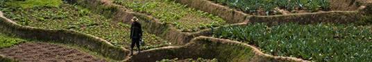 SOLIDARIETA 12 ORTI IN AFRICA GRAZIE A VASSALLO