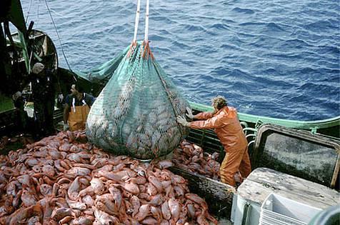 pesca-importazioni-divieto