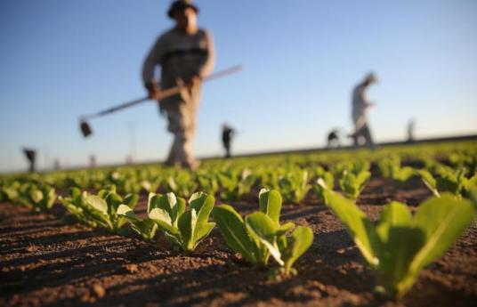 agricoltura-italiana1
