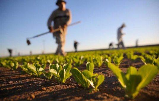 Assunzioni-congiunte-in-agricoltura-ancora-dubbi