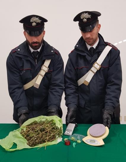 marijuana CCSAPRI.jpg